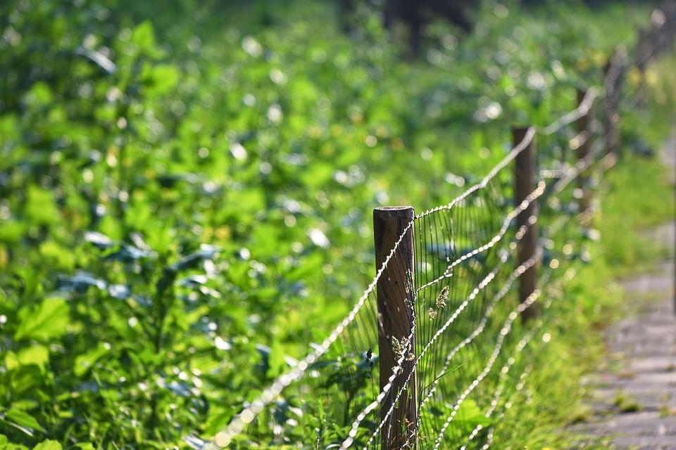 Ogrodzenia terenów leśnych – jak zamontować siatkę leśną?
