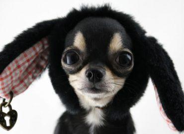 Podatek od posiadania psa